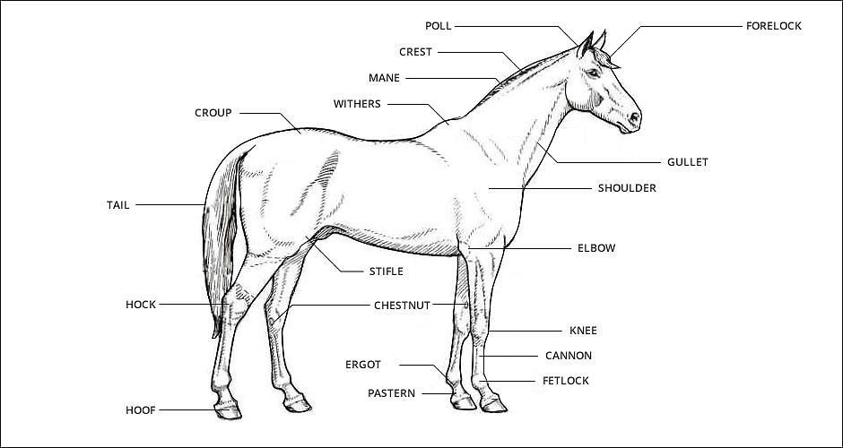 South African Quarter Horse Association - FAQs